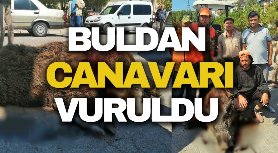 BULDAN CANAVARI VURULDU