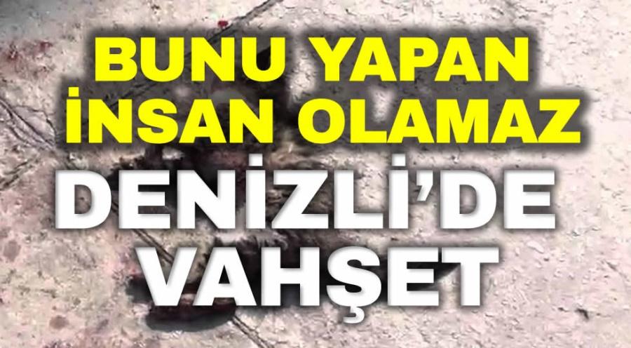 DENİZLİ'DE VAHŞET
