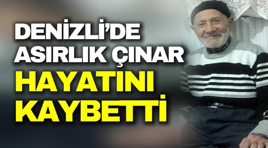 DENİZLİ'DE ASIRLIK ÇINAR HAYATINI KAYBETTİ  - OBJEKTİF DENİZLİ HABER